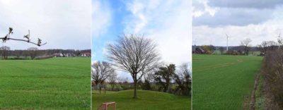 Hecken, Wiesen, Bäume und wertvolle Natur im Bereich Freisenbrock